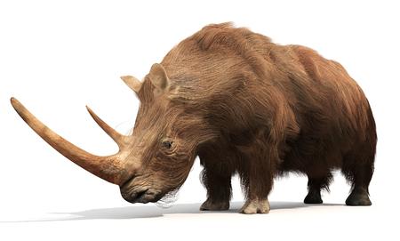 흰색 배경에 멸종 털이 많은 코뿔소의 그림입니다. 털 코뿔소는 유럽과 북부 아시아 공통의 홍적세 거대 동물의 일원이었다. 성인 털 코뿔소는 약 일반 스톡 콘텐츠