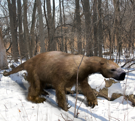 An illustration of the extinct giant ground sloth Megalonyx slowing mmaking his way through an Ice Age Ohio forest. Megalonyx jeffersonii was a large, heavily built animal about 9.8 feet 3 m long existing from the Miocene through the Pleistocene.