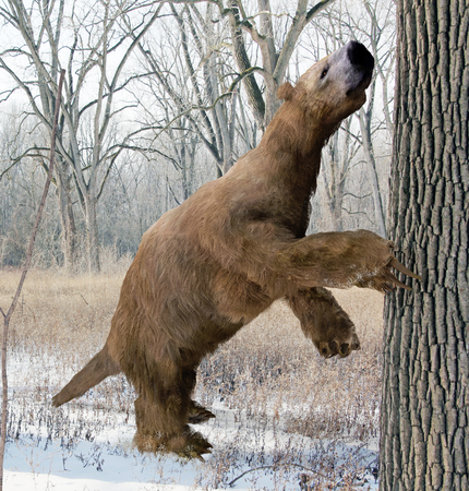 An illustration of the extinct giant ground sloth Megalonyx searching a tree for food in an Ice Age Ohio forest. Megalonyx jeffersonii was a large, heavily built animal about 9.8 feet 3 m long existing from the Miocene through the Pleistocene. Stock Photo
