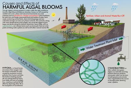 有害藻類ブルームのインフォ グラフィック