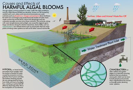 Harmful Algal Bloom Infographic
