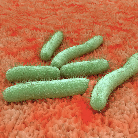 E. Coli Bacteria - An illustration of Escherichia coli commonly abbreviated E. coli is a rod-shaped bacterium of the genus Escherichia that can cause serious food poisoning in their hosts.