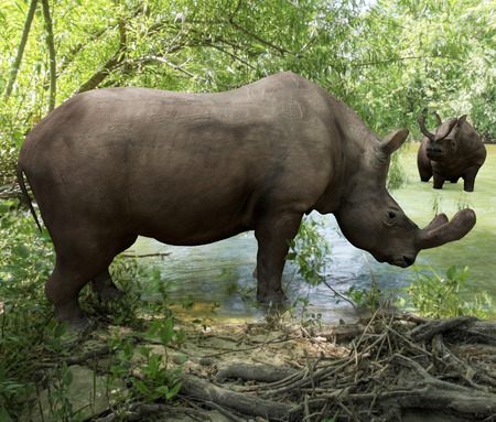 An illustration depicting Brontotherium getting a drink in forest river. Brontotherium is an extinct group of large rhinoceros-like browsers related to horses. It was endemic to North America during the Late Eocene epoch.