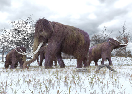 An illustration of a herd of Woolly Mammoths grazing in the early morning frost. Stock Photo