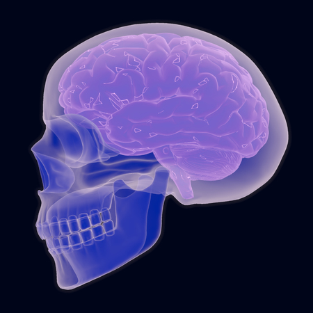 An x-ray style illustration depicting a human skull and brain.
