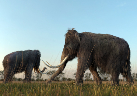 mammoth: An illustration of a group of Woolly Mammoths grazing in a field in the morning sun.
