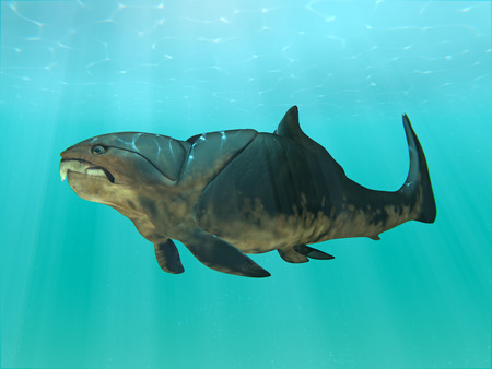 An illustration of the giant (30 feet) prehistoric fish Dunkleosteus swimming. Dunkleosteus was a placoderm fish that existed during the Late Devonian period, about 380–360 million years ago. Banque d'images
