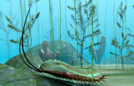 An illustration of a Trilobite moving about on a Cambrian Period (400 million years ago) sea bottom. Trilobites are a well-known fossil group of extinct marine arthropods that form the class Trilobita.