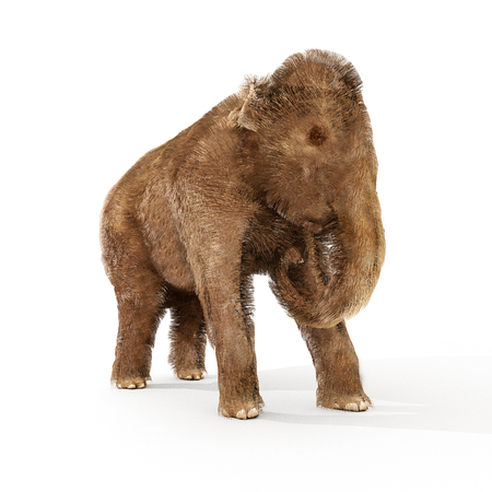 An illustration of a young Woolly Mammoth on a white background. Stock Photo