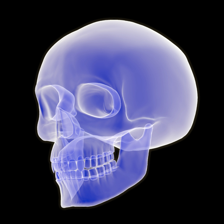 An x-ray style 3D illustration depicting a human skull in three quarter view