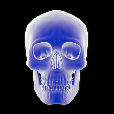 검은 색 배경에 인간의 두개골의 정면도의 3-D 그림. 스톡 콘텐츠