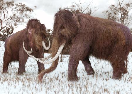 Een 3-D illustratie van twee Wollige Mammoeten grazen in een met sneeuw bedekte grasveld tijdens de ijstijd (45.000 jaar geleden).