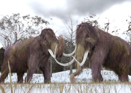 Een driedimensionale illustratie van twee gekloonde wollige mammoeten die grazen in een met sneeuw bedekte grasachtig veld in een hypothetisch scenario.