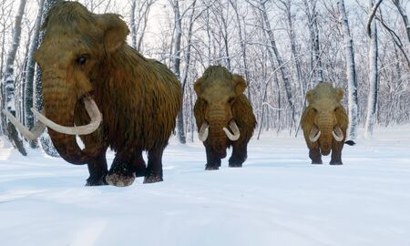 A 3D illustration of a herd of Woolly Mammoths walking through a snowy forest.