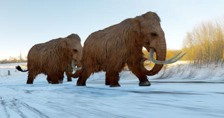 A 3D illustration of a herd of Woolly Mammoths walking across a snowy field during the Ice Age. Reklamní fotografie