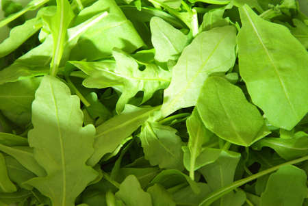 vitamines: Salad rocket leaves  rucola  lit by a beam of white light close-up