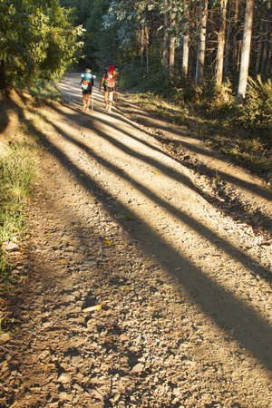 thee: Spain, Galicia, Pilgrims on the Camino de Santiago, morning light, shades of thee trunks