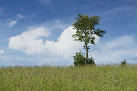 grassy knoll: Single tree in the grassland, sunlit, some clouds in the sky, summer Stock Photo