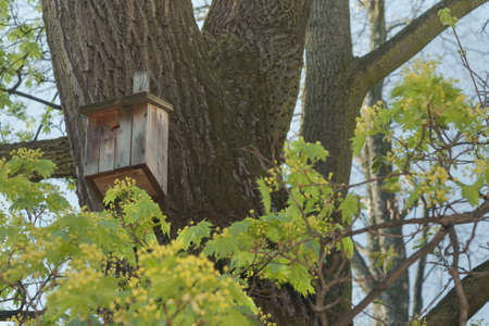 roosting: Birdhouse on a tree trunk in springtime