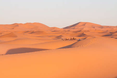 Tourists riding camels at Erg Chebbi, Merzouga, Morocco