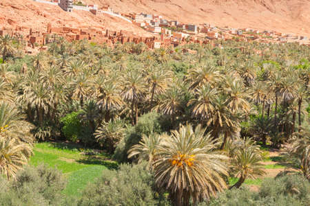 Sunlit Date Palm Orchard at Ait Ijjou by Tinghir in Morocco, Sunlit, Mountains in the background Banco de Imagens