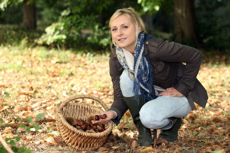 Woman gathering chestnuts photo