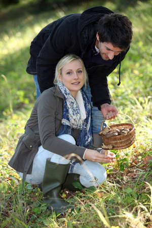 Couple picking mushrooms in a forest photo