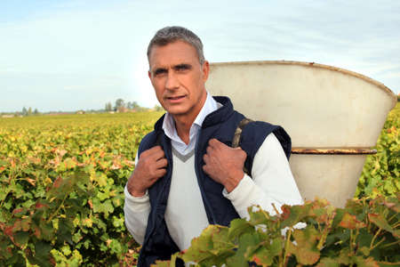 wine grower: 50 years old man holding basket amongst vines