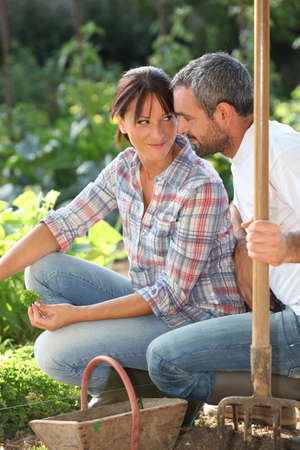 unusual vegetables: Romantic couple in an allotment Stock Photo