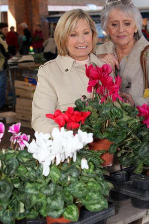 55 60 years: mature ladies in open air market choosing plants