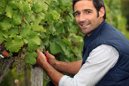 Man working in a vineyard photo