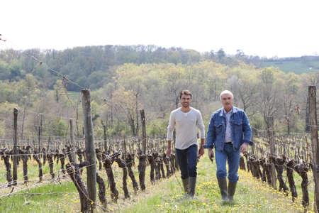 Two men walking through vineyard photo