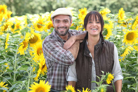agreeable: a couple of farmers in a sunflowers field