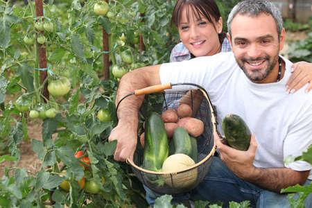 allotment: Couple growing vegetables
