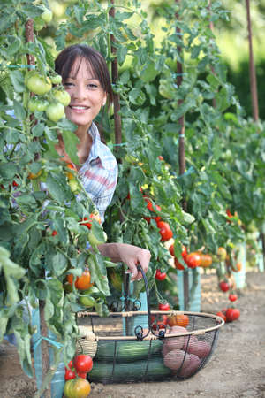 Woman picking fresh tomatoes and other vegetables photo