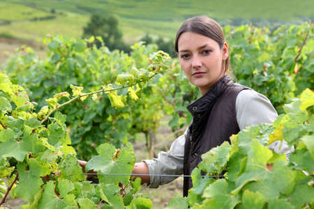 tending: Young woman tending grapevines