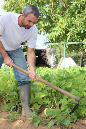 jardinero: El hombre de jardinería Foto de archivo