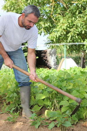 dug well: Man gardening