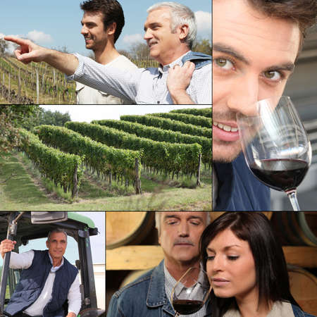 Collage of winemakers, wine and vineyards photo