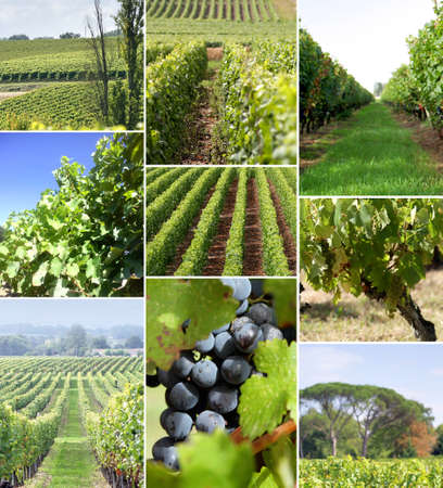 trellis: Images of a vineyard