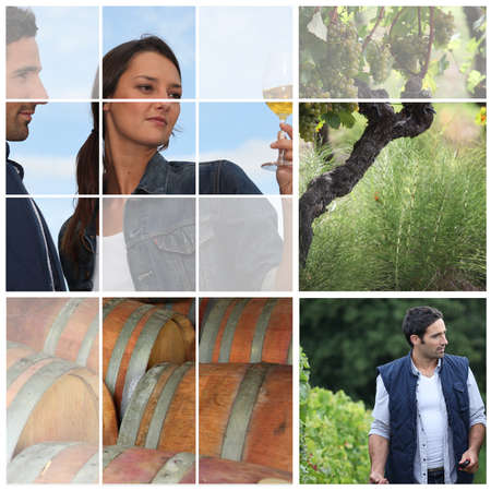 barrels, a vine shoot and wine makers photo