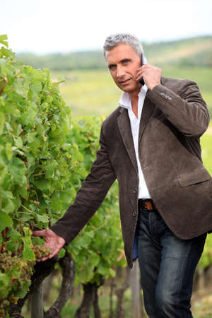 wineyard: Farmer with mobile telephone stood in vineyard