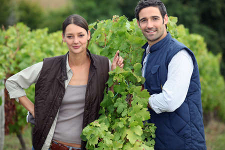 Smiling couple working in a vineyard photo