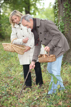 Middle-aged couple gathering mushrooms photo