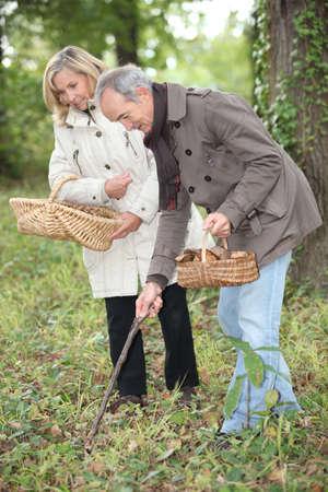 Middle-aged couple gathering mushrooms Stock Photo - 11605036