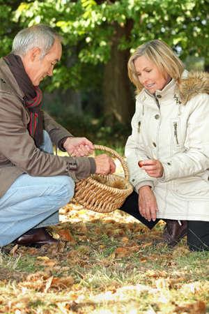 Senior man and senior woman collecting chestnuts Stock Photo - 11605311