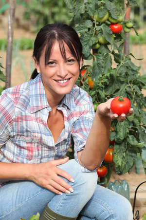 mujer arrodillada: Mujer en el jardín de rodillas por la planta de tomate
