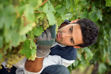 wine grower: close-up of a wine-grower