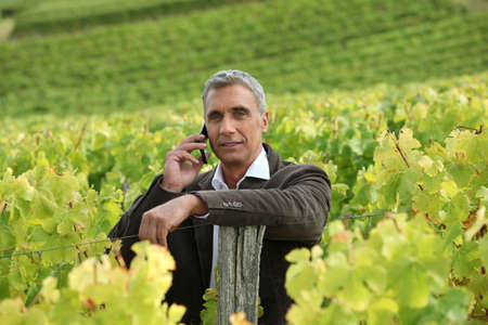 A mature man in a middle of a vineyard. Stock Photo - 11756182