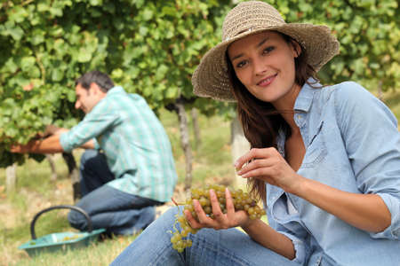 wine grower: Man and woman working in vineyards